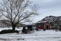 Photo-Dec-01-3-03-01-PM