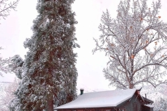 Photo-Nov-28-1-59-29-PM